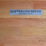 Australian Beech
